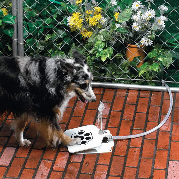 Doggie Fountain – Self-Serve Outdoor Water Dispenser